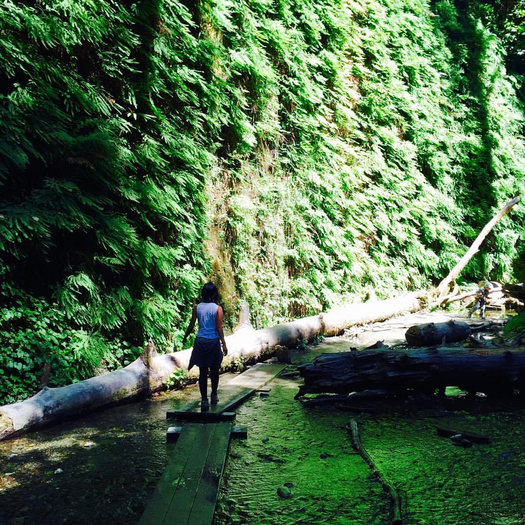 Fern Canyon in Redwoods (where Jurassic Park was filmed!)