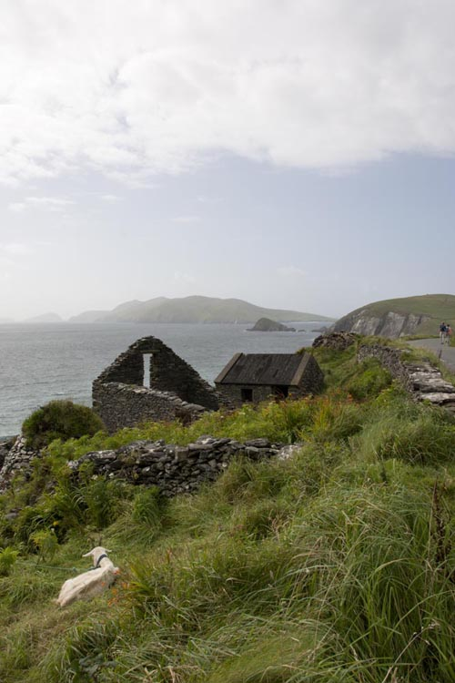 Stefanos Metaxas Dingle Ireland goat ruin.jpg
