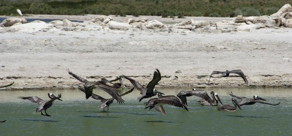 Stefanos Metaxas Salton Sea Wildlife