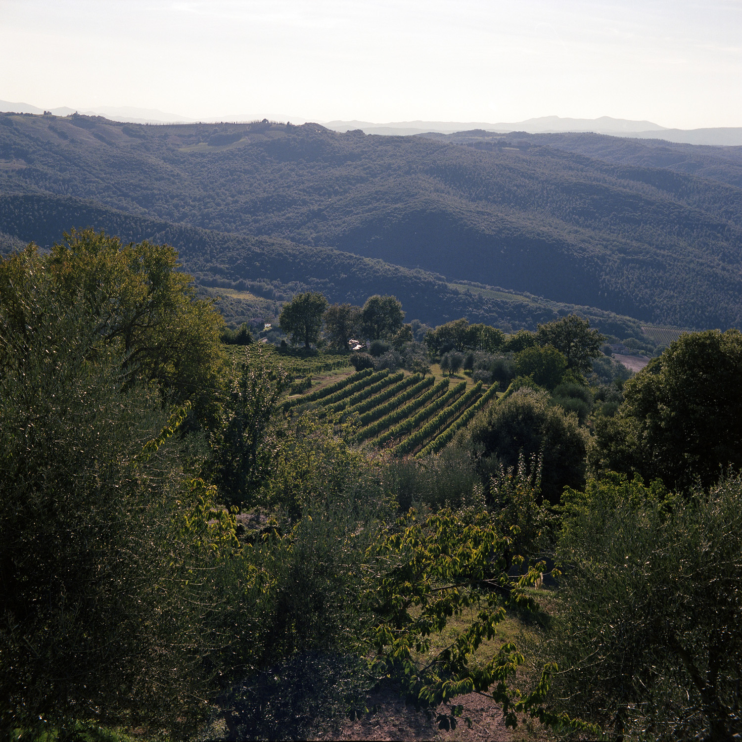 View from Montalcino