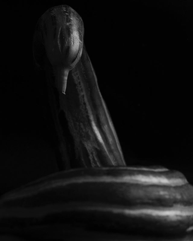 I'm waiting for my film from France to be developed. In the meantime I'm trying my hand at some still life.  Cucumber no.1, inspired by Edward Weston.  #stilllife #stilllifephotography #blackandwhite #snake