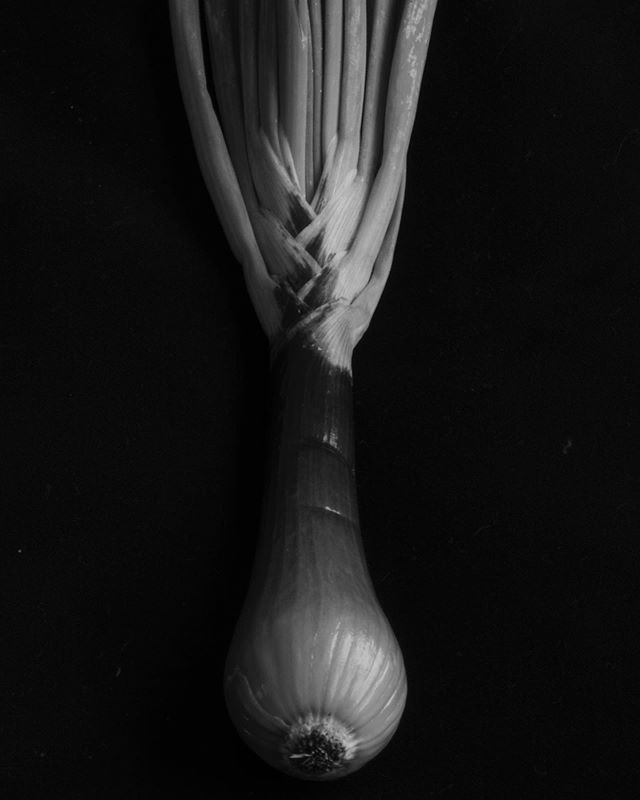 Onion no 1. Grown by @lehmannfamilyfarm  #stilllife #naturamorta #blackandwhite