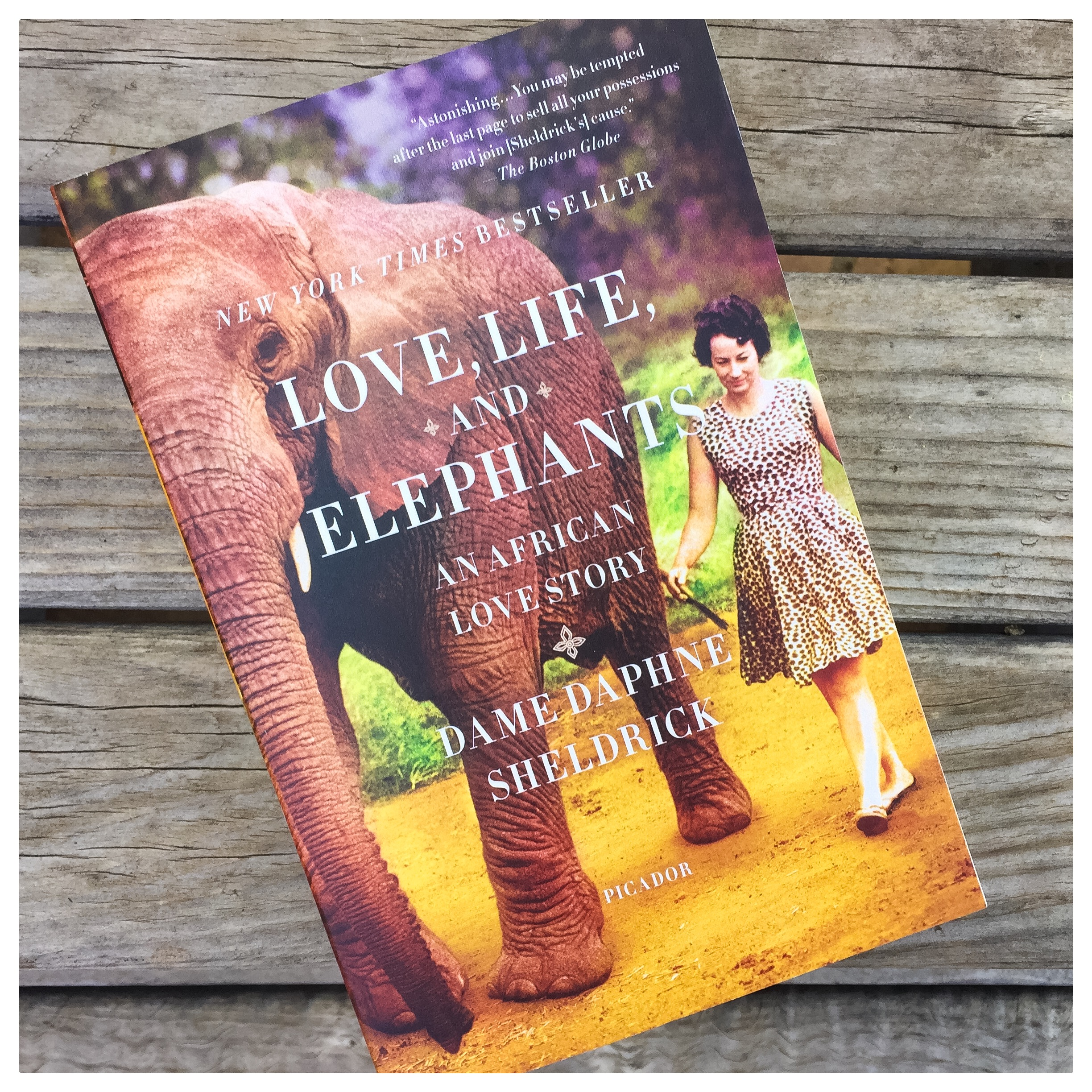 Elephants and Africa... just another book we hope you love as much as we do!