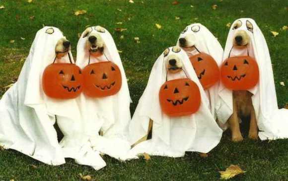 dog-halloween-costumes-2.jpg