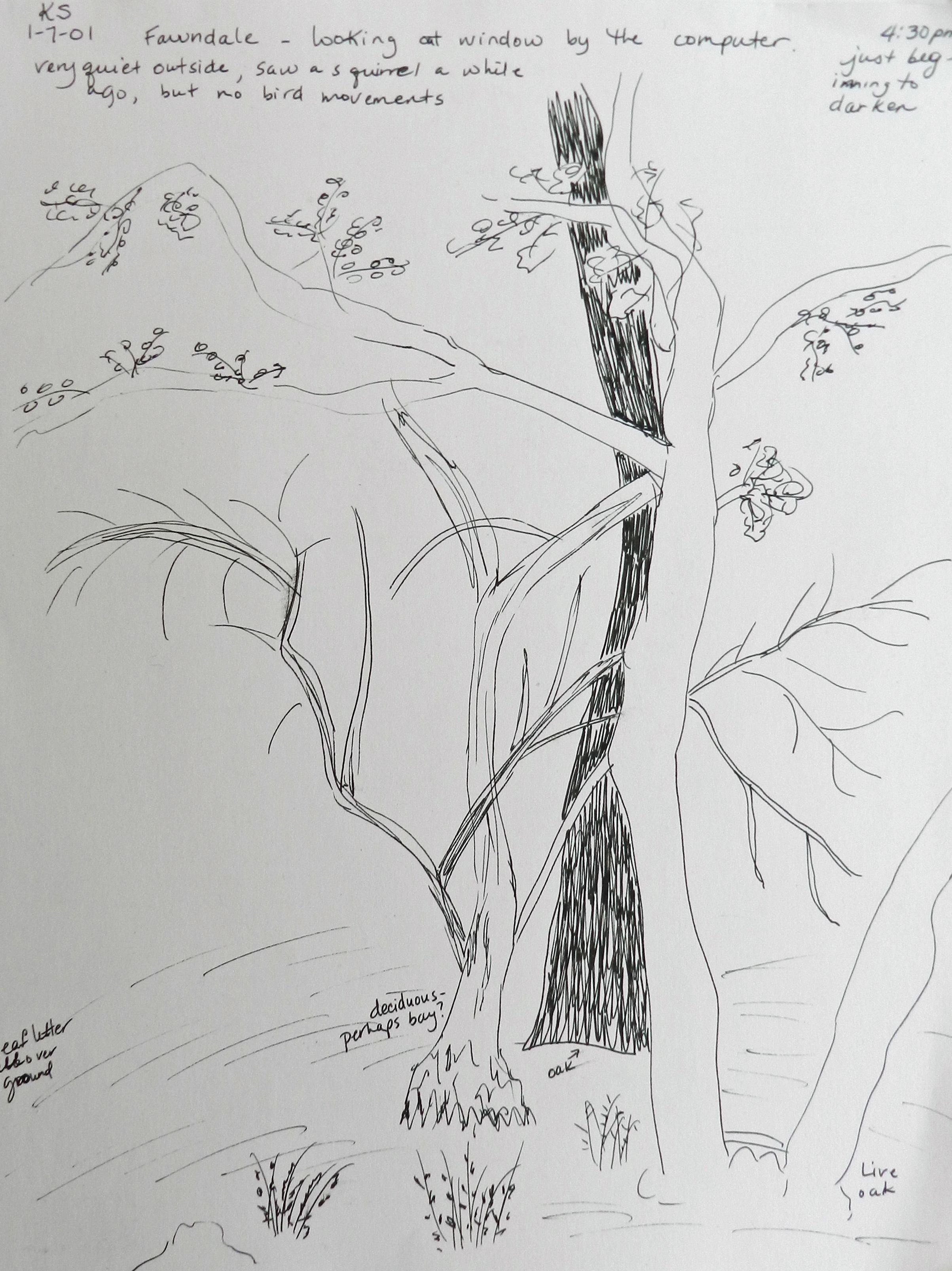 Older Sketches (2)