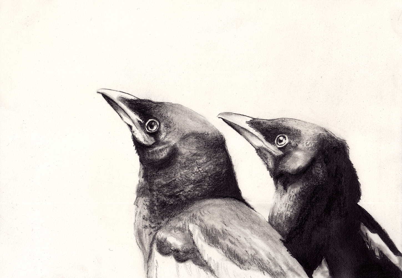 magpie babies artwalk.jpg