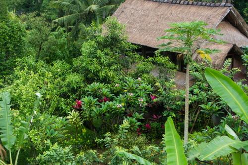 Garden View.jpeg