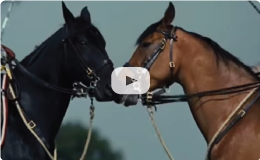 War Horse: The Musical