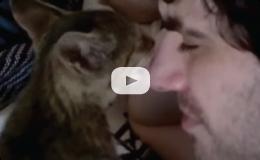 Kitten Licks Jew's Nose