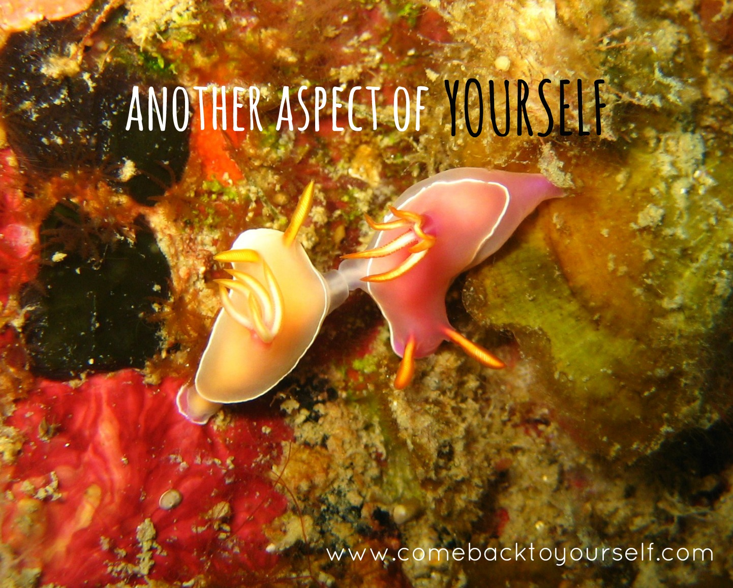 another aspect of yourself come back to yourself retreats