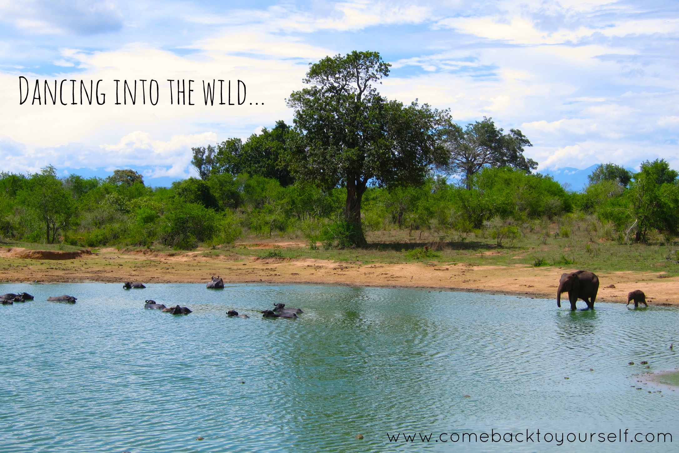 dancing into the wild come back to yourself retreats