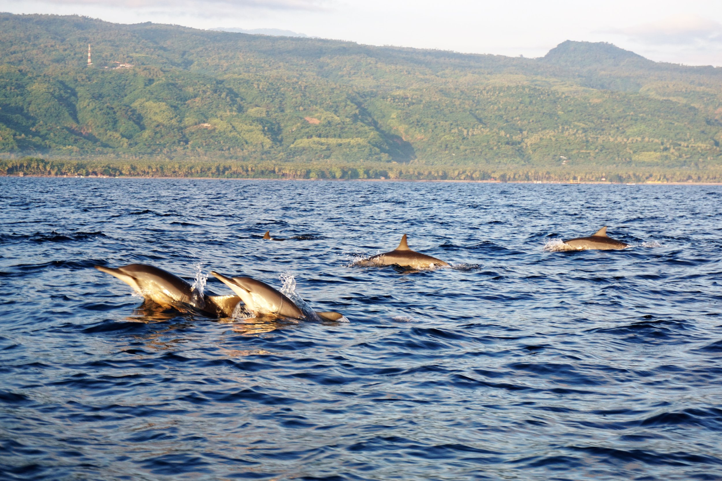 Sunrise dolphin tour on your north Bali yoga holiday
