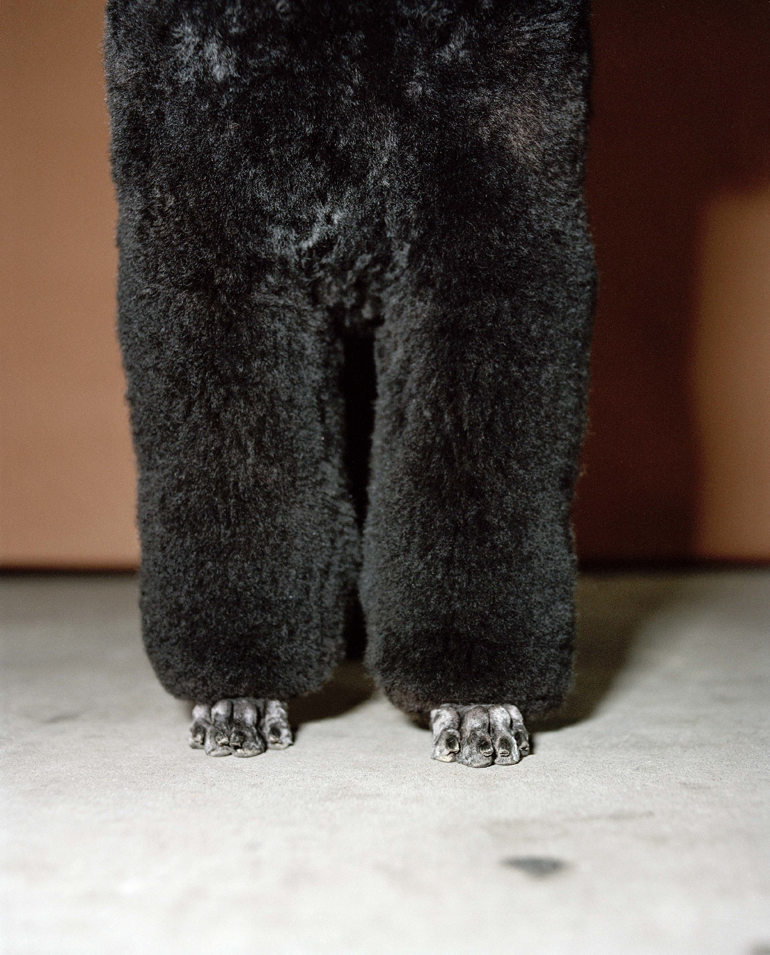 legs of a poodle
