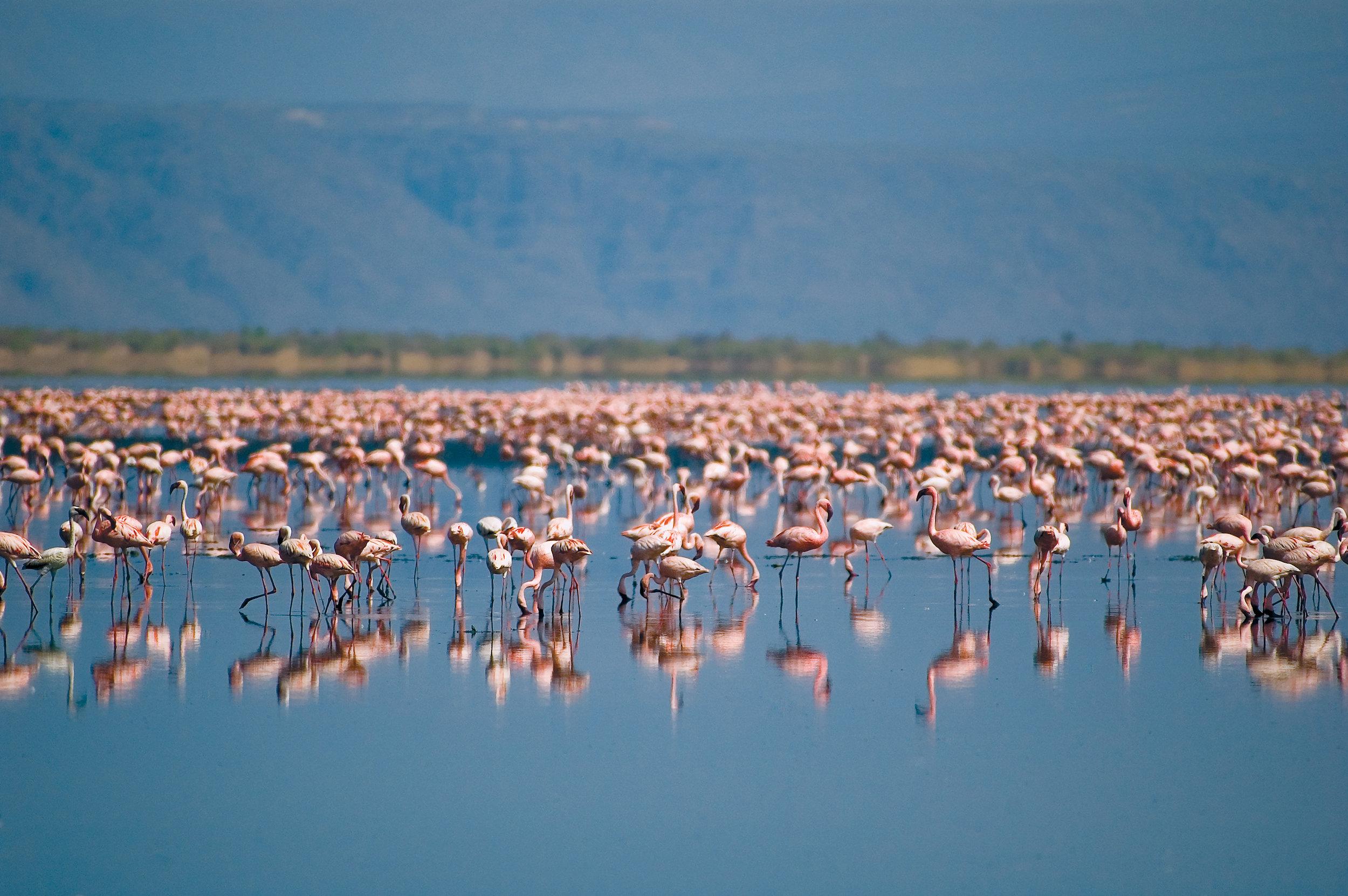 Ngorongoro.jpeg