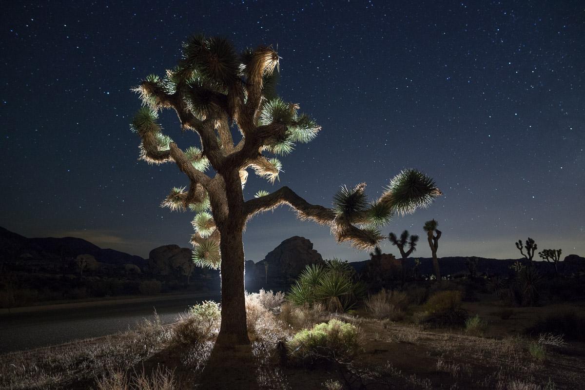 Joshua Tree-0847.jpg