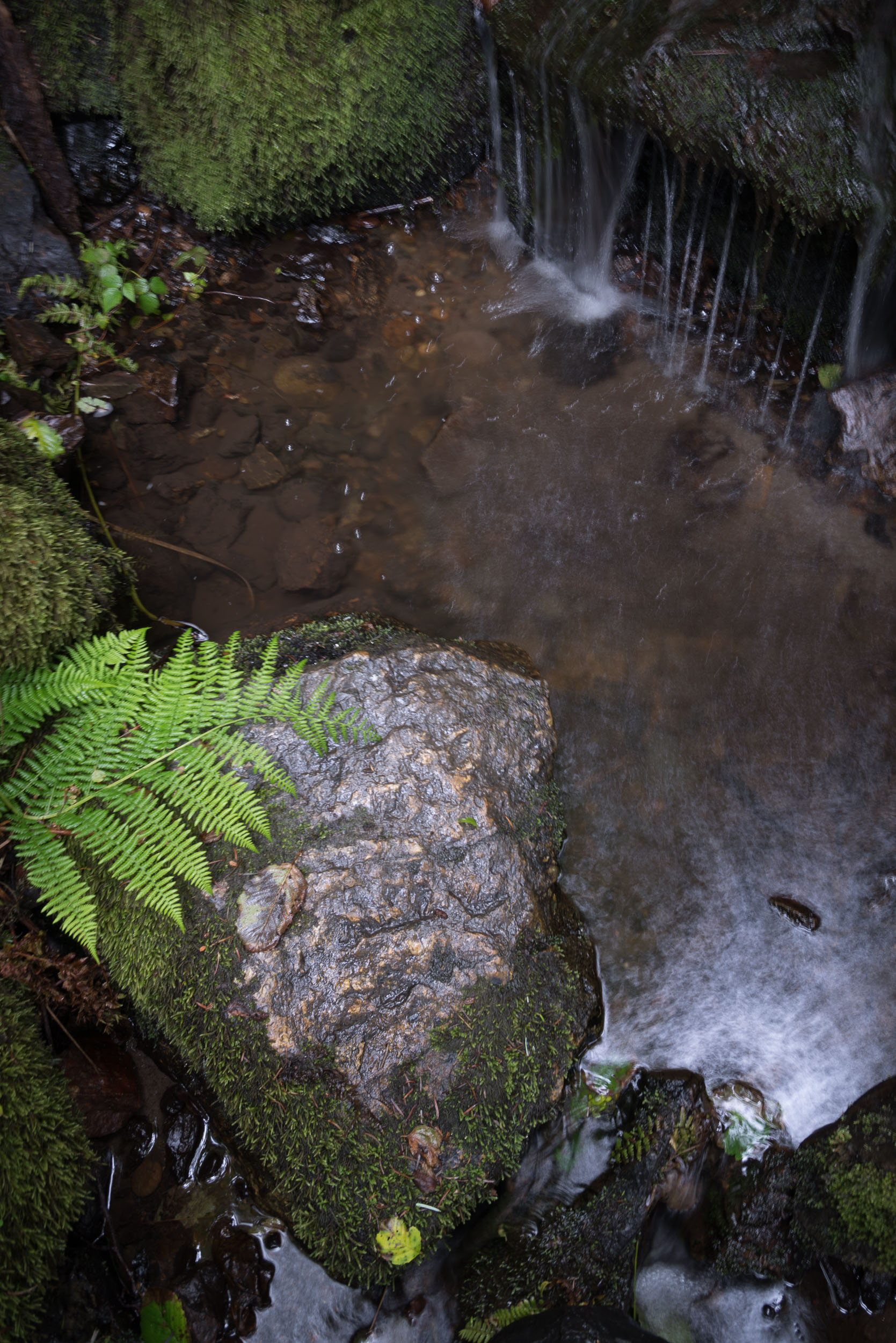 Redwood-8.jpg