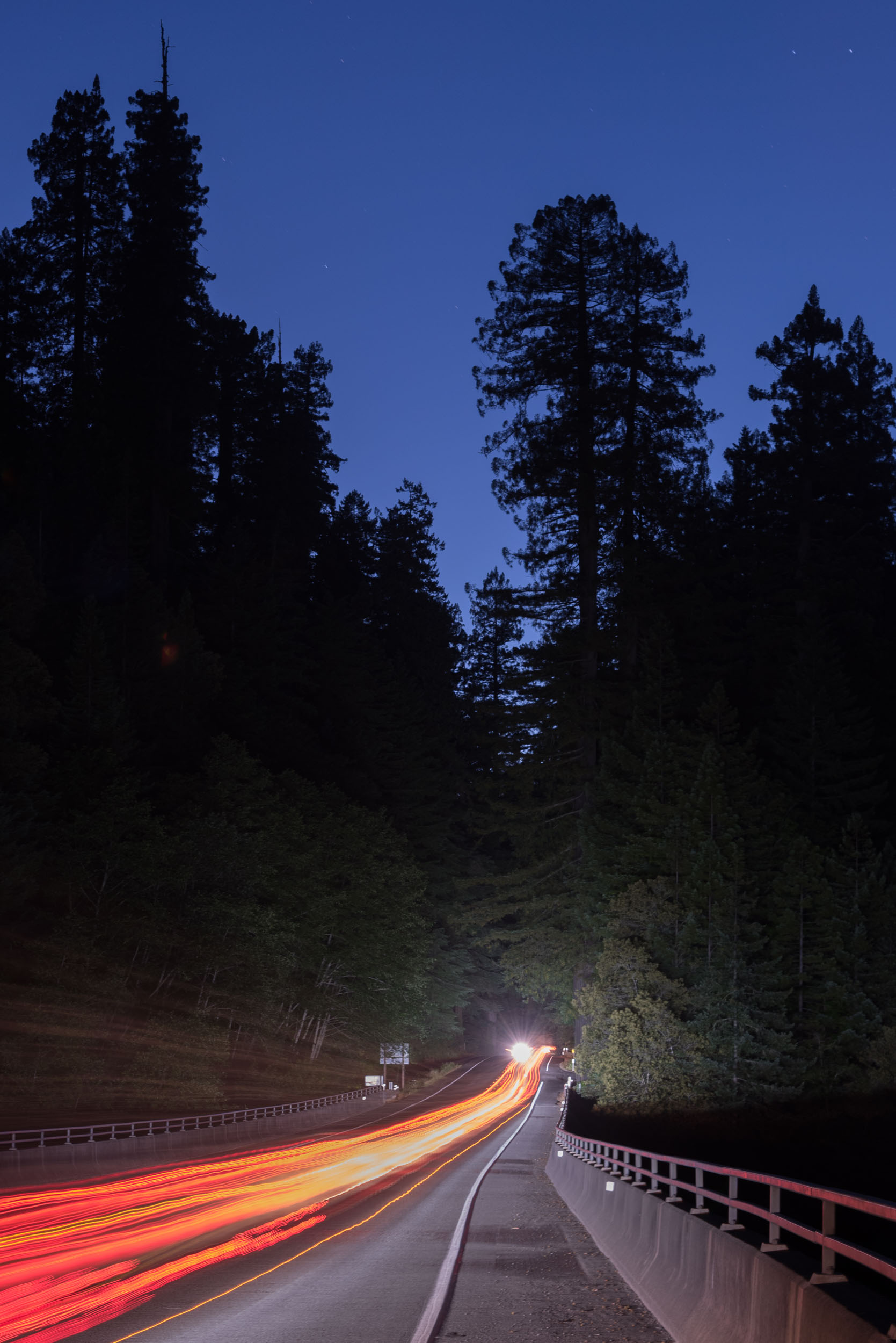 Redwood-9.jpg