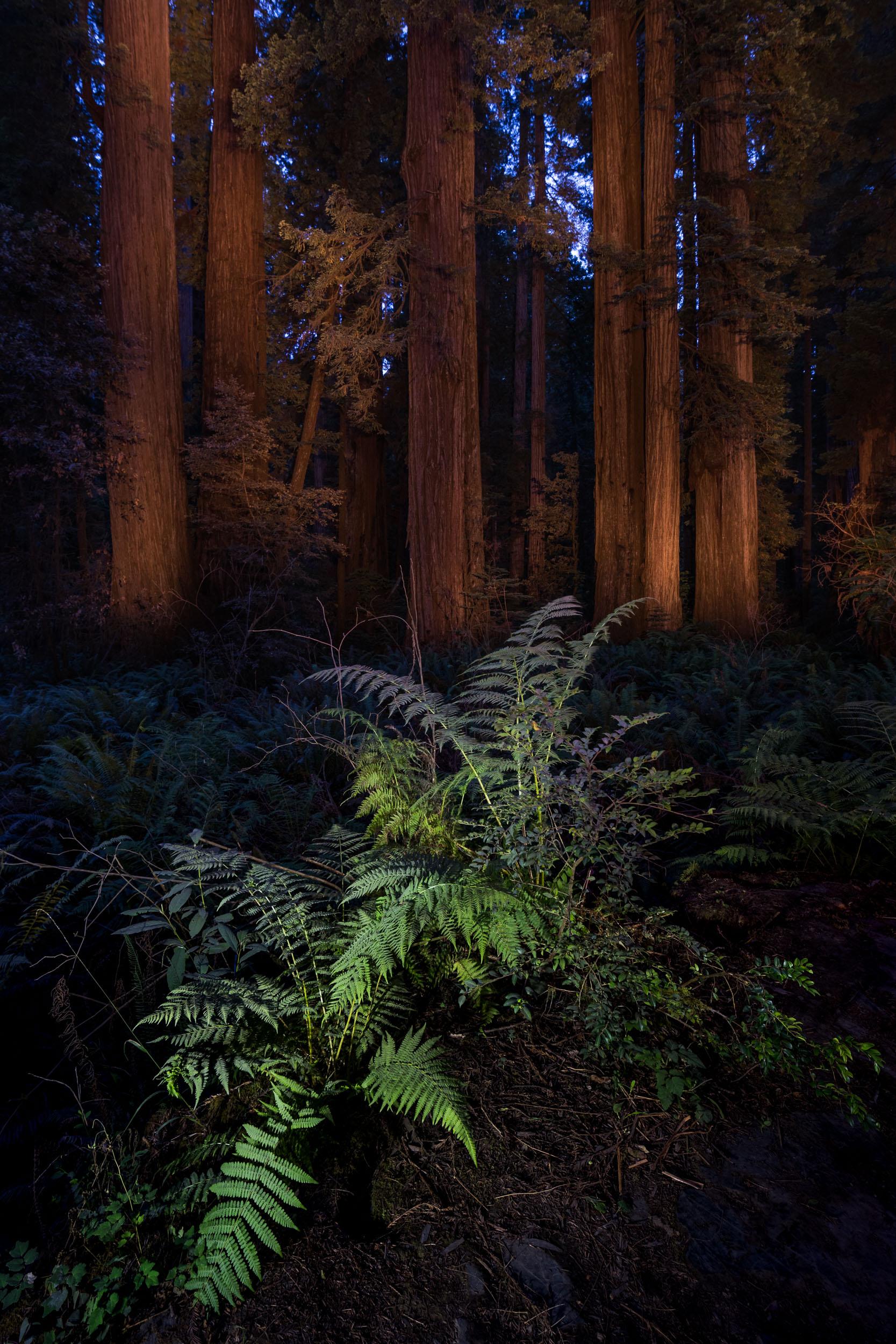 Redwood-13.jpg