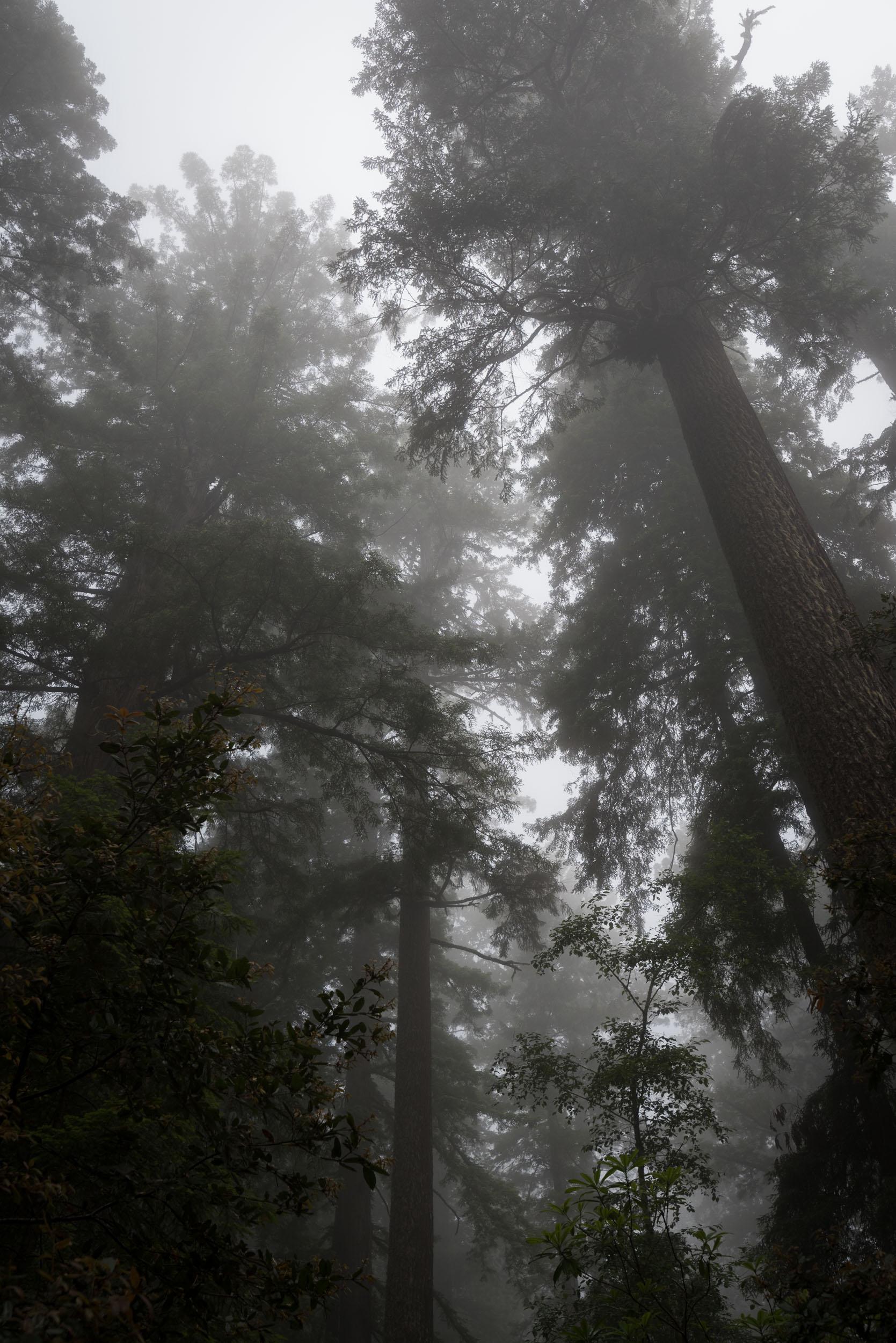 Redwood-16.jpg