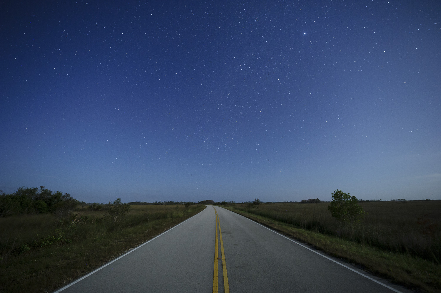 This past winter Chris Nicholson was able to drive in Everglades National Park without headlights—just the moonlight over the landscape was plenty to light the way. Photo by Chris Nicholson.