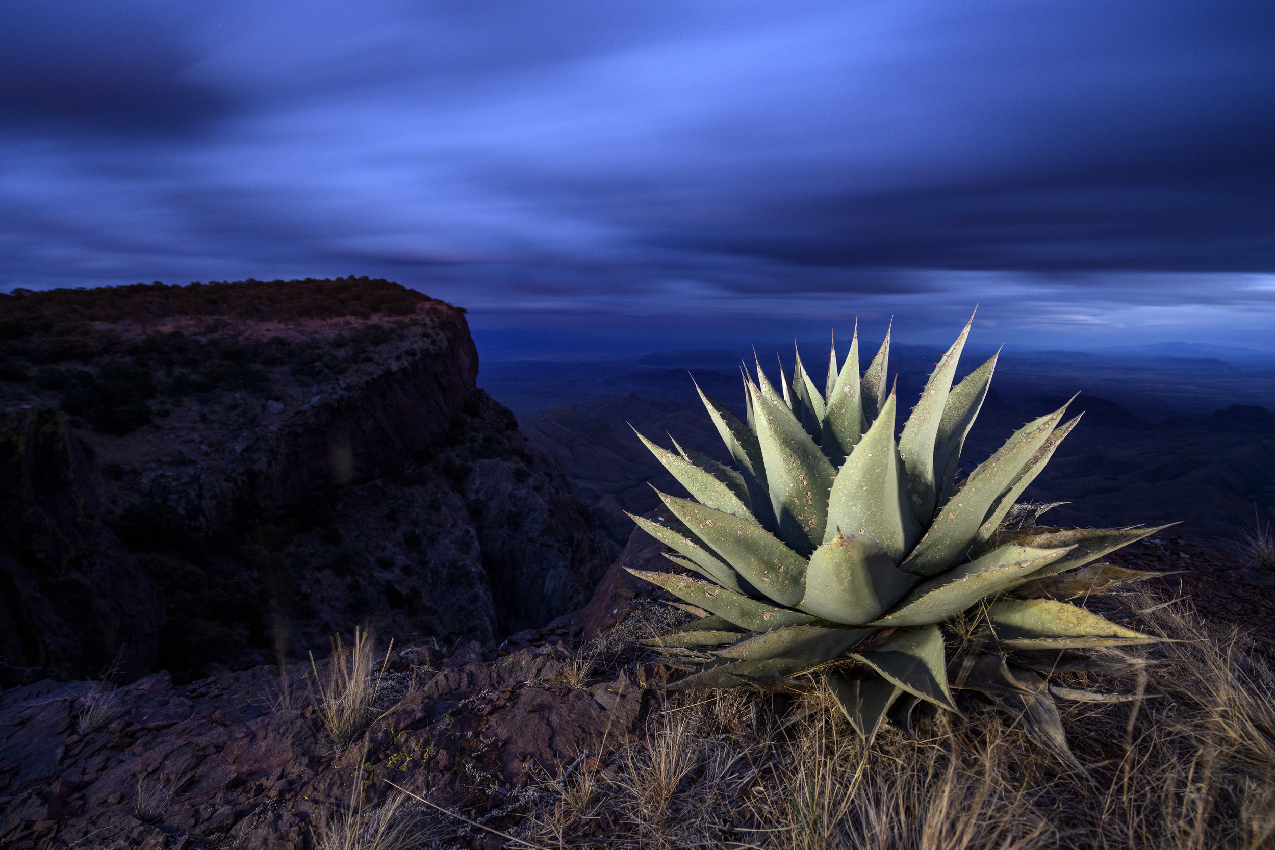 Agave on the South Rim, Big Bend National Park.  Nikon D850 ,  Nikon 14-24mm f/2.8 . 2 minutes, f/5, ISO 1000. Light painted with a Coast HP7R. © 2018 Chris Nicholson.