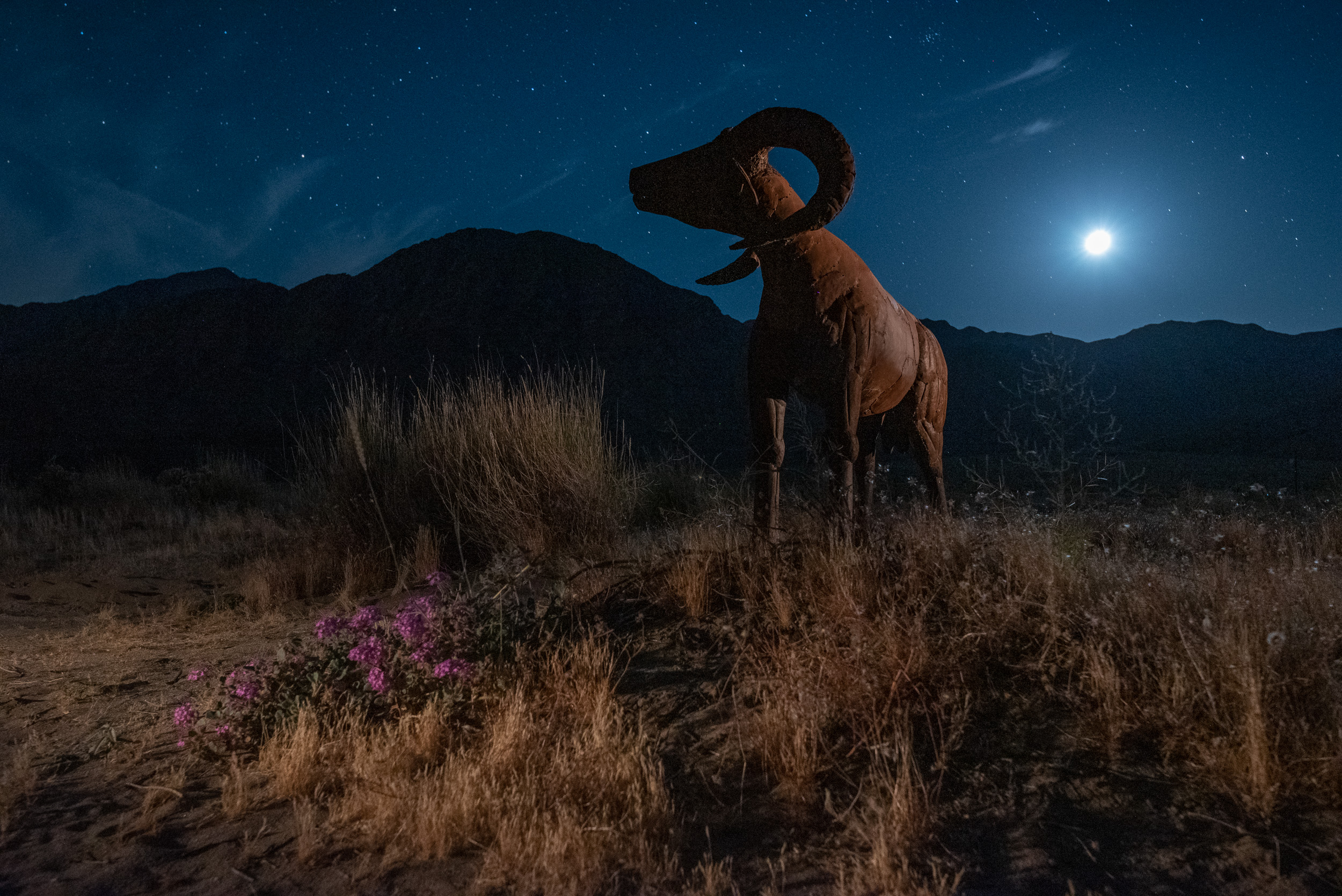"A bighorn sheep (aka ""a borrego"") with the moon rising behind it. Nikon D750 with a  Tamron 15-30mm f/2.8  lens, light painted with a  Coast HP5R . 15 seconds, f/5.6, ISO 6400."