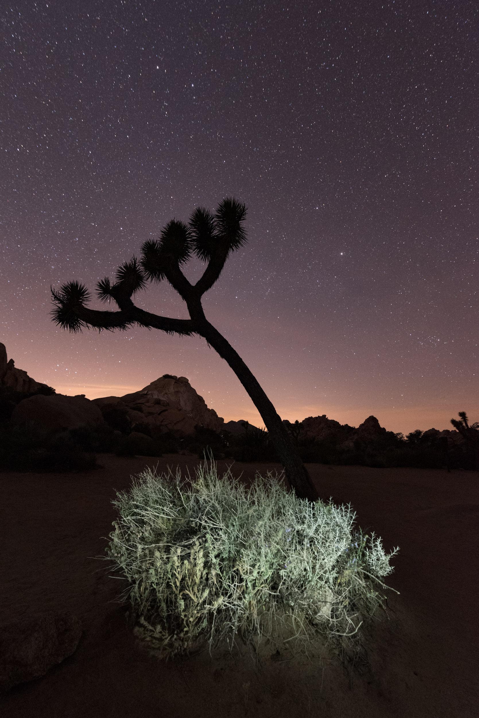 Joshua Tree-7862.jpg