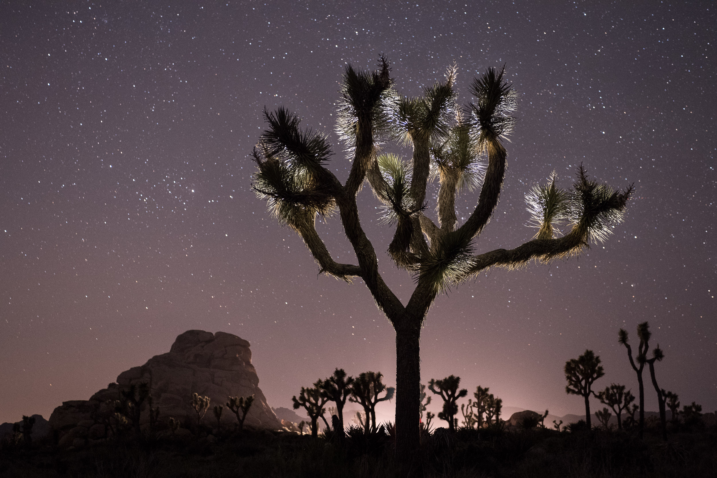 <p><strong>Joshua Tree National Park (Waitlist)</strong><br/> April 25-30, 2020</p>