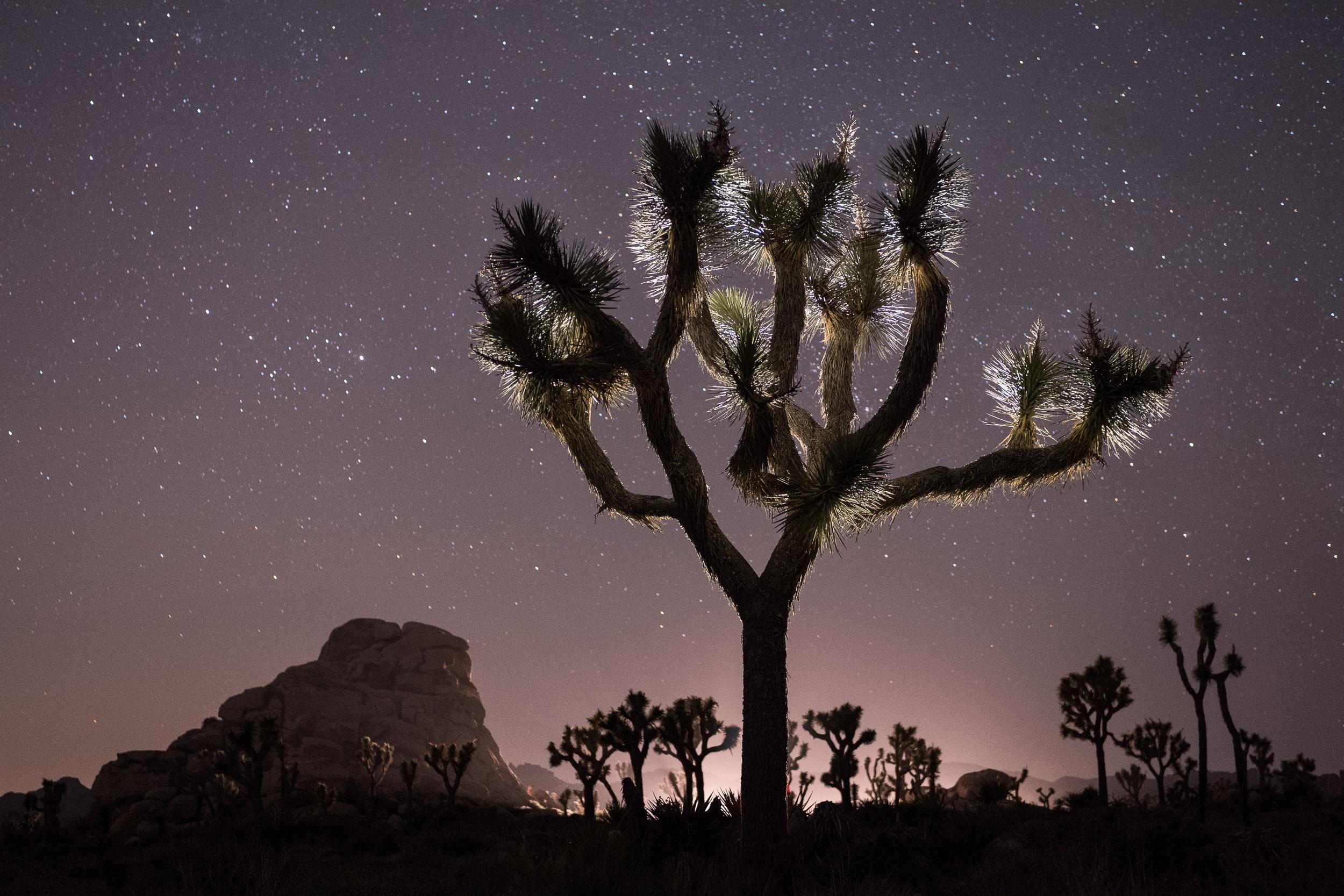 joshua tree_DSC2748-E_Chris Nicholson.jpg