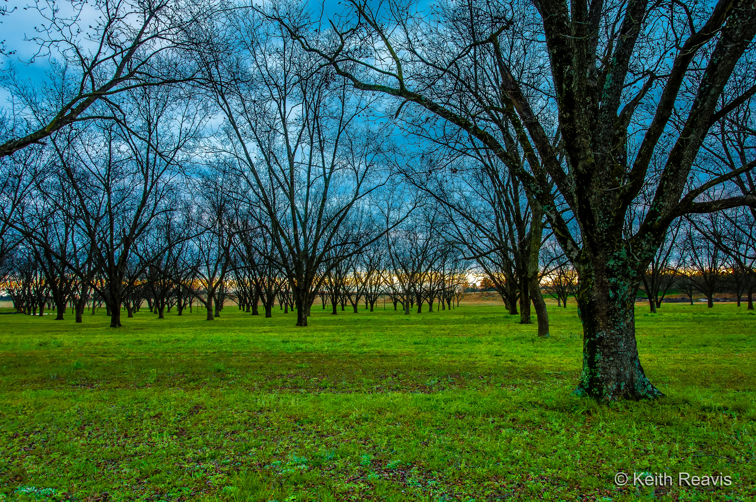 2013 Pecan Orchard GA 01_DxO-2.jpg