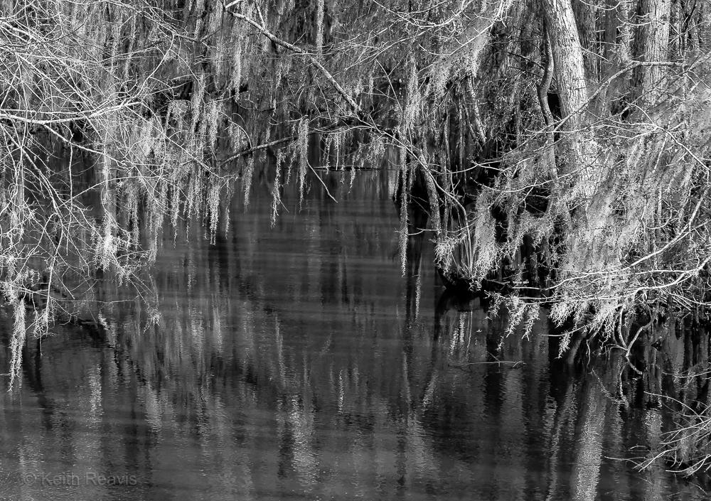 2013 Creek Spanish Moss Bartow GA 10_DxO.jpg