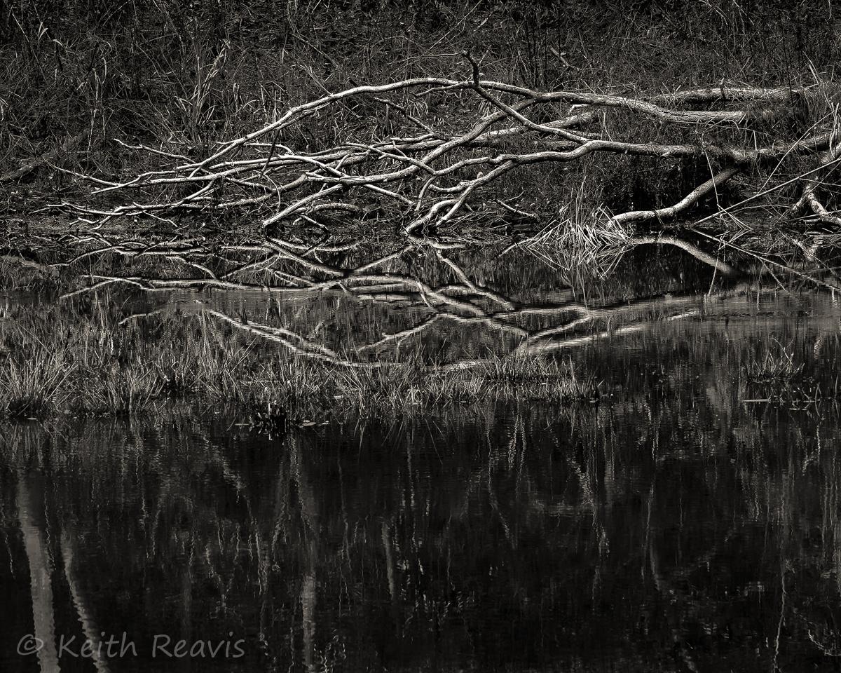 Fallen Tree Reflection at Lake Hampton #1.jpg
