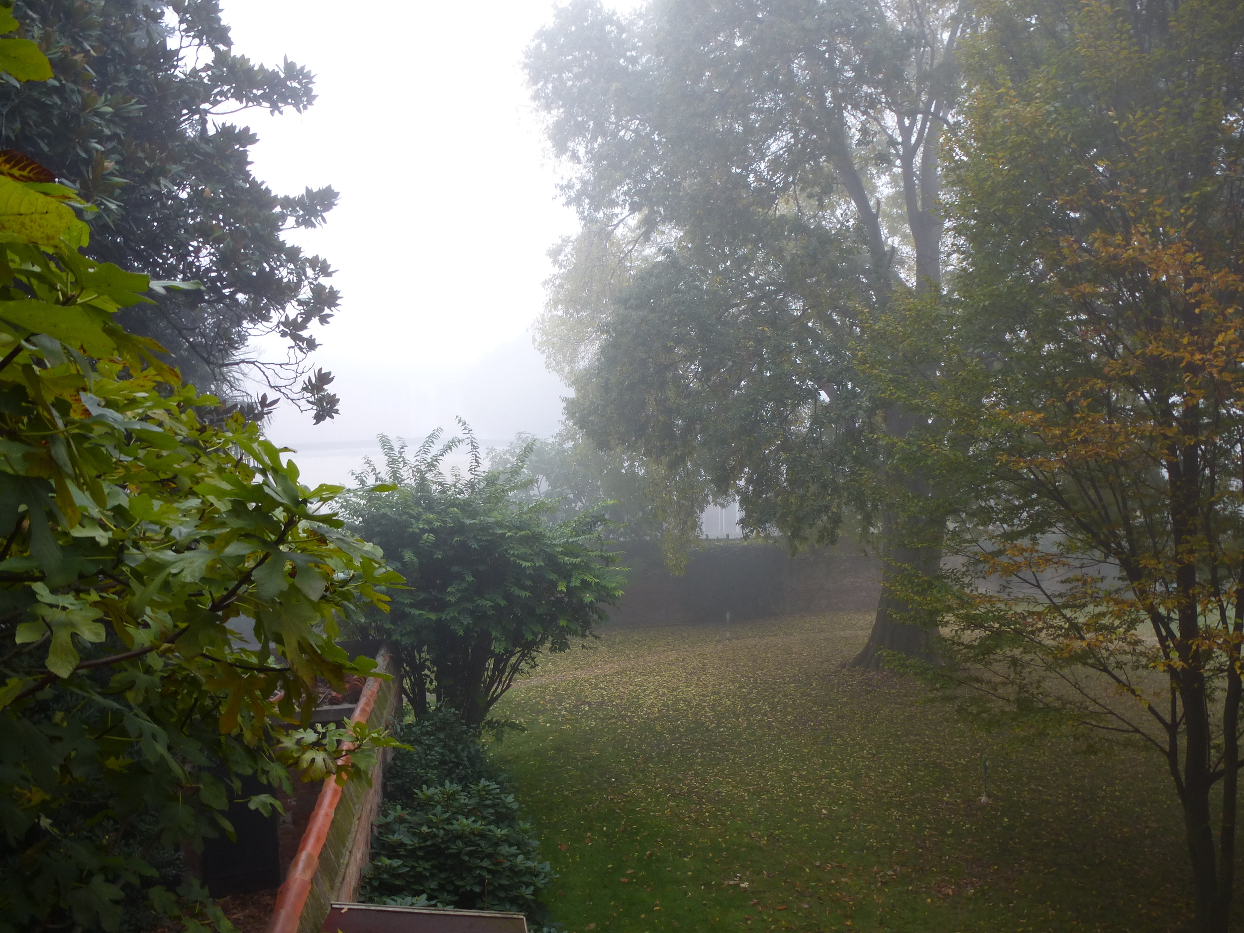The hidden garden in the mist