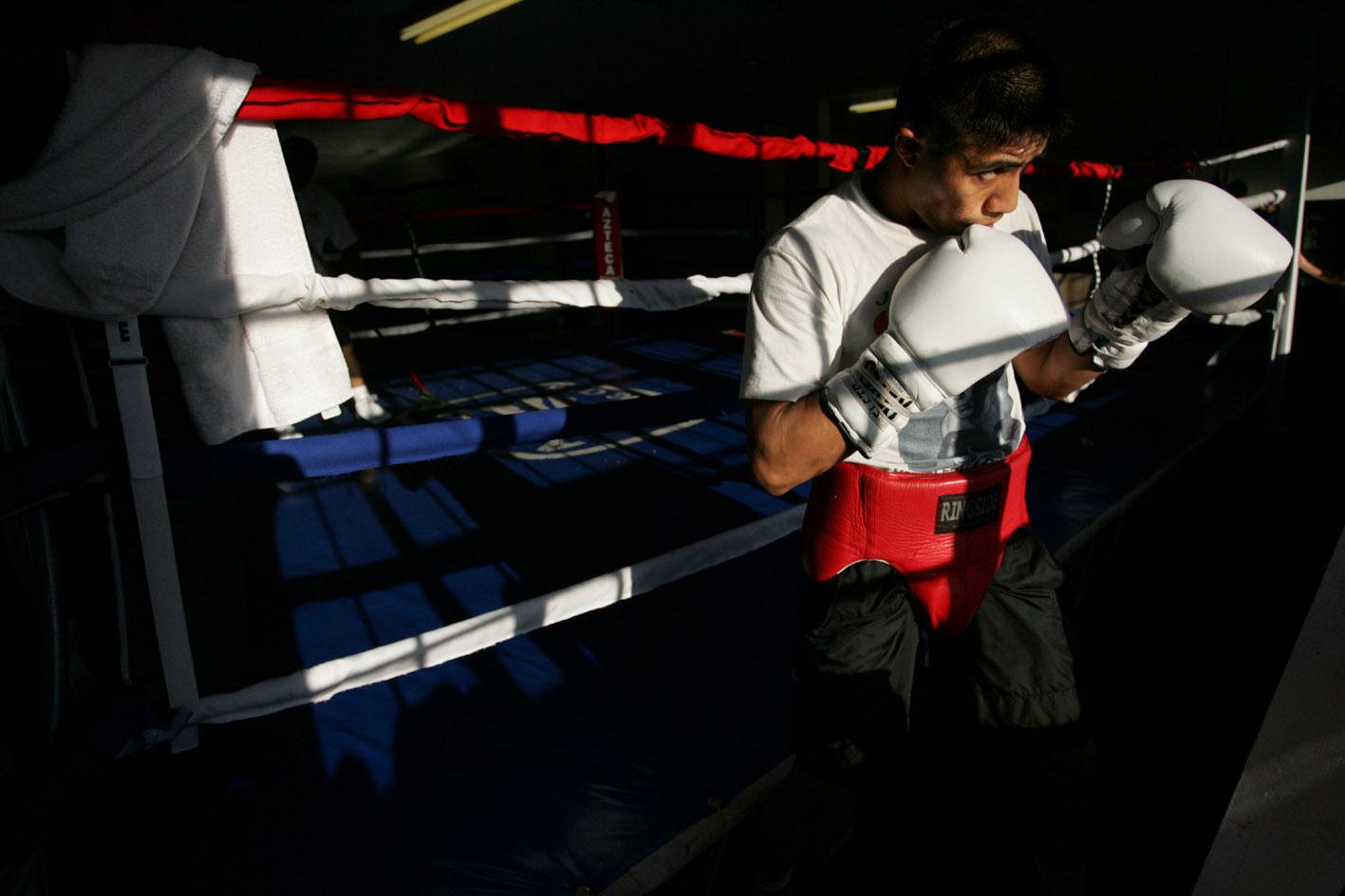 b_boxer5.jpg