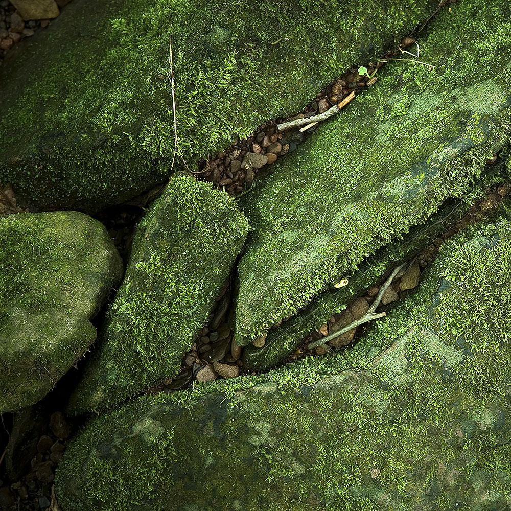 Creek Bed Abstract #58