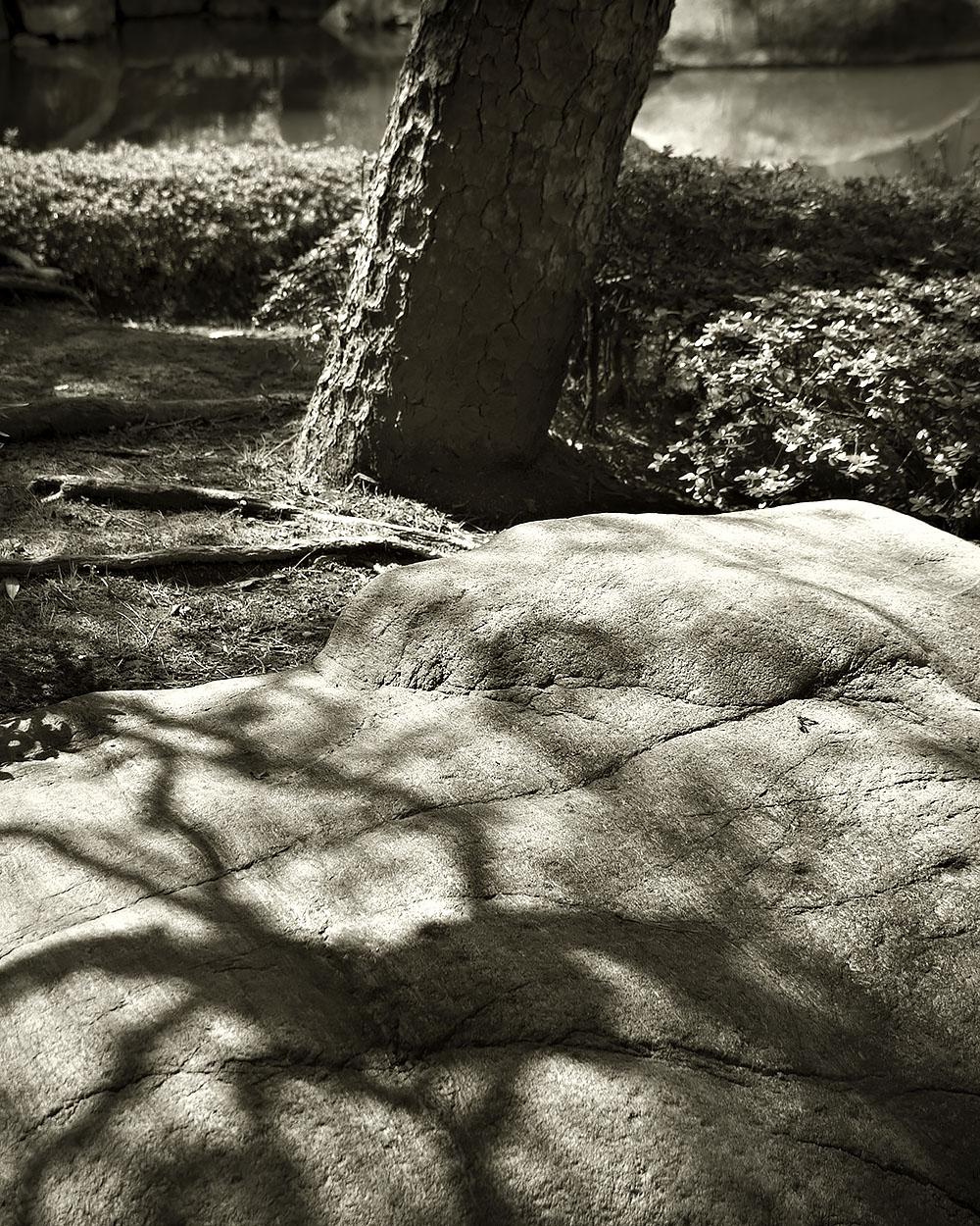 Japanese Garden Project #4