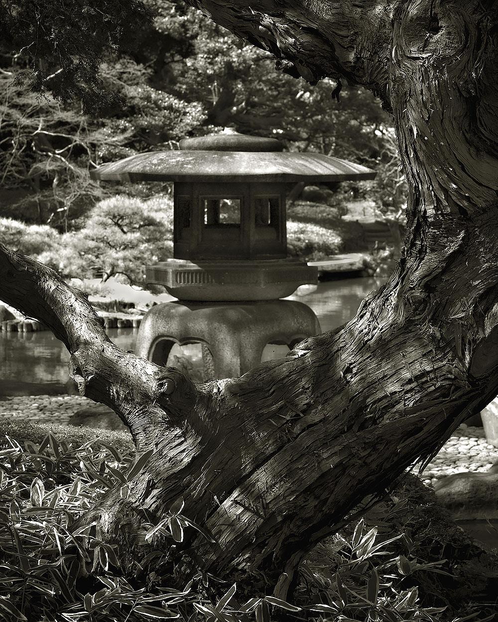 Japanese Garden Project #5