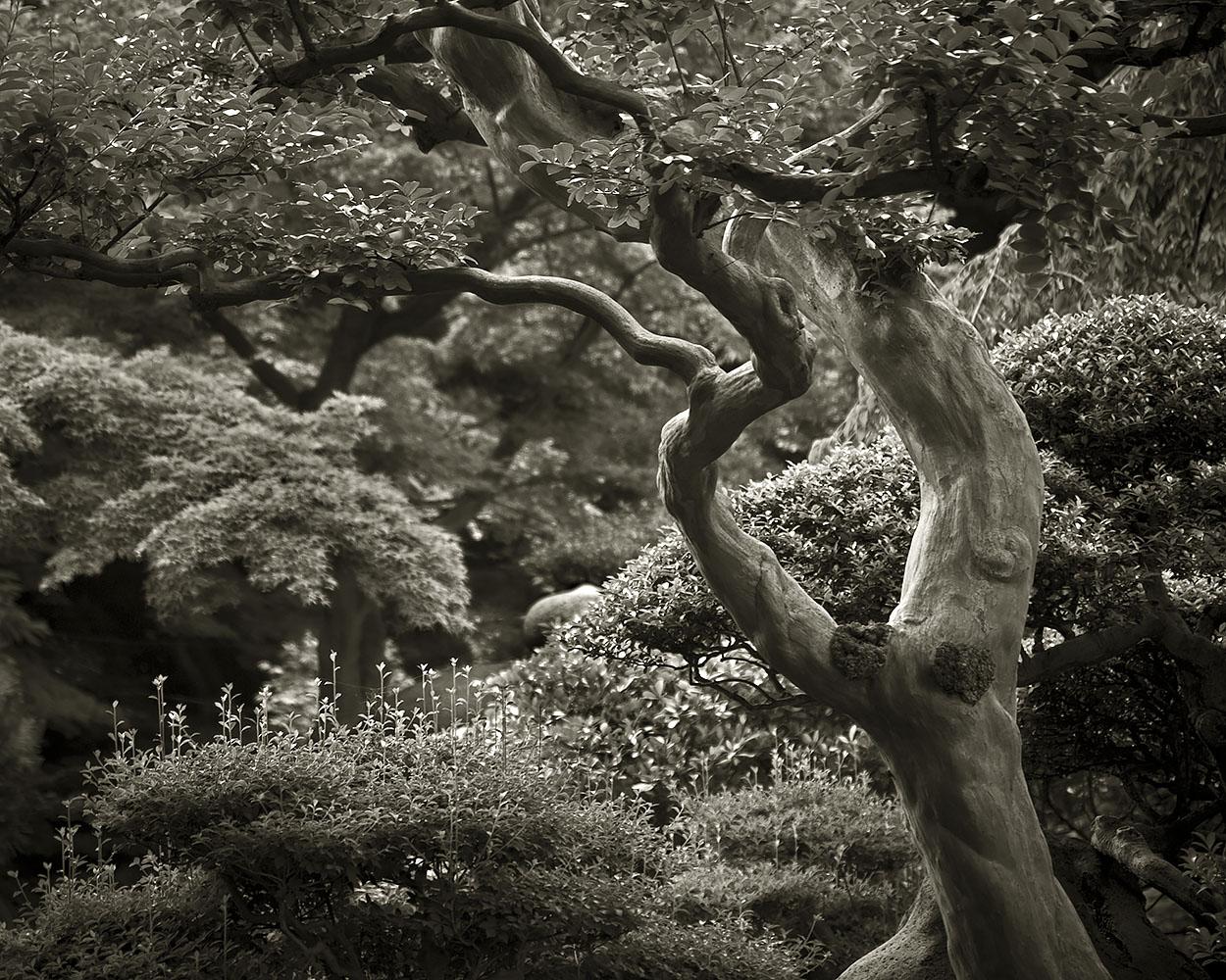 Japanese Garden Project #6