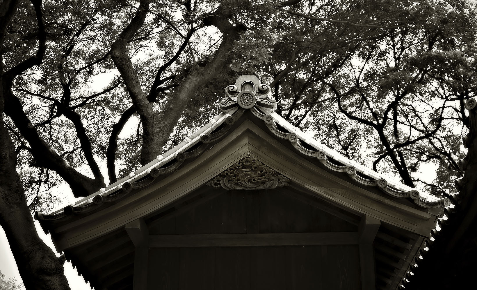 Japanese Garden Project #8