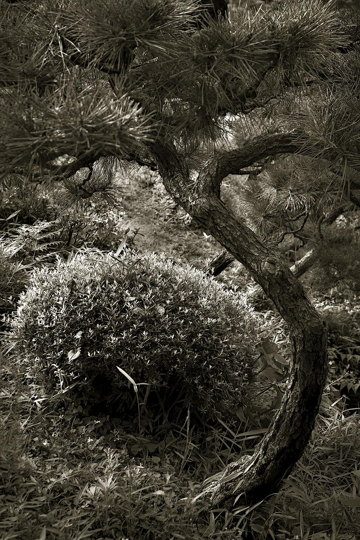 Japanese Garden Project #19