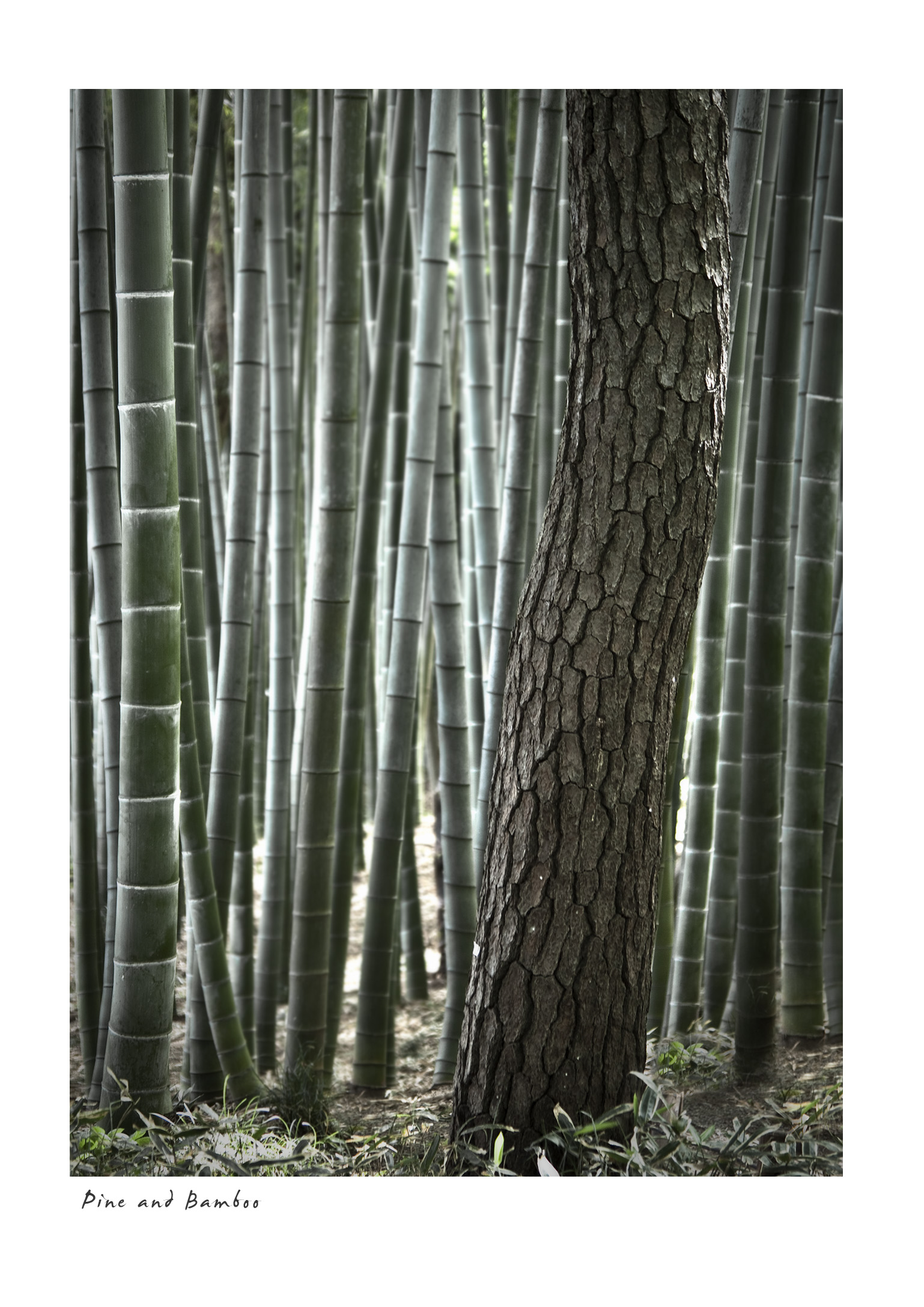 Pine and Bamboo