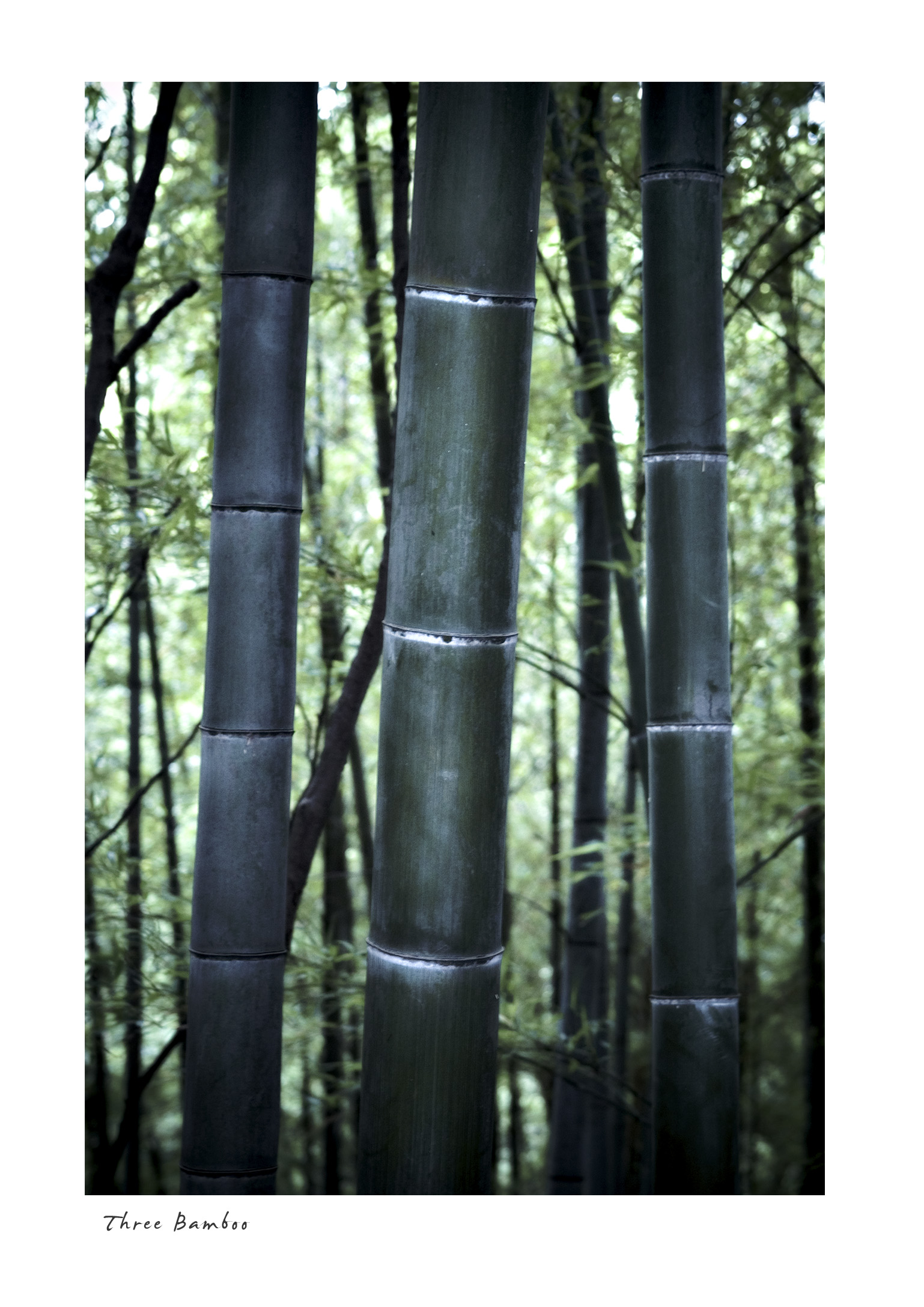 Three Bamboo