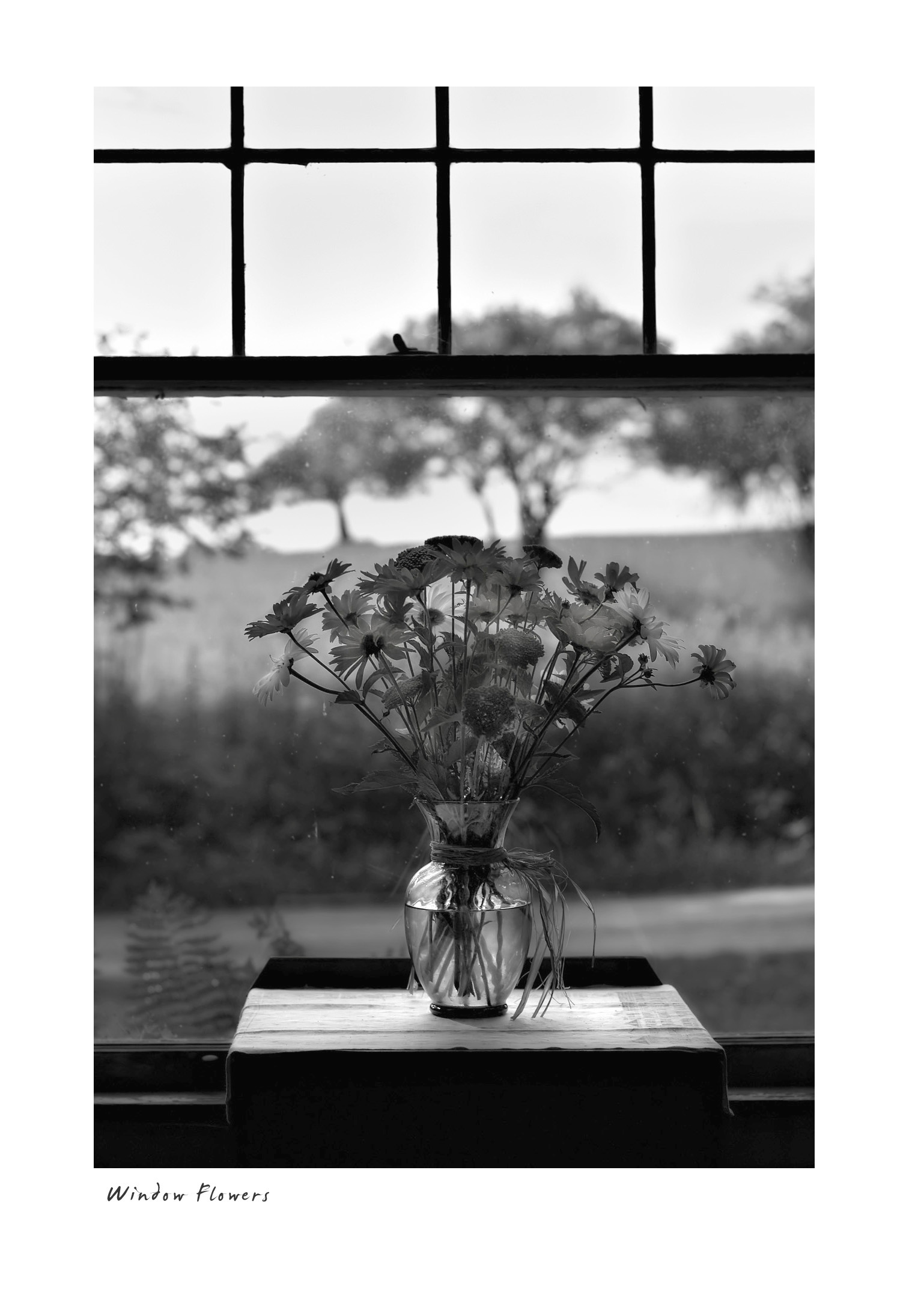 Window Flowers #1