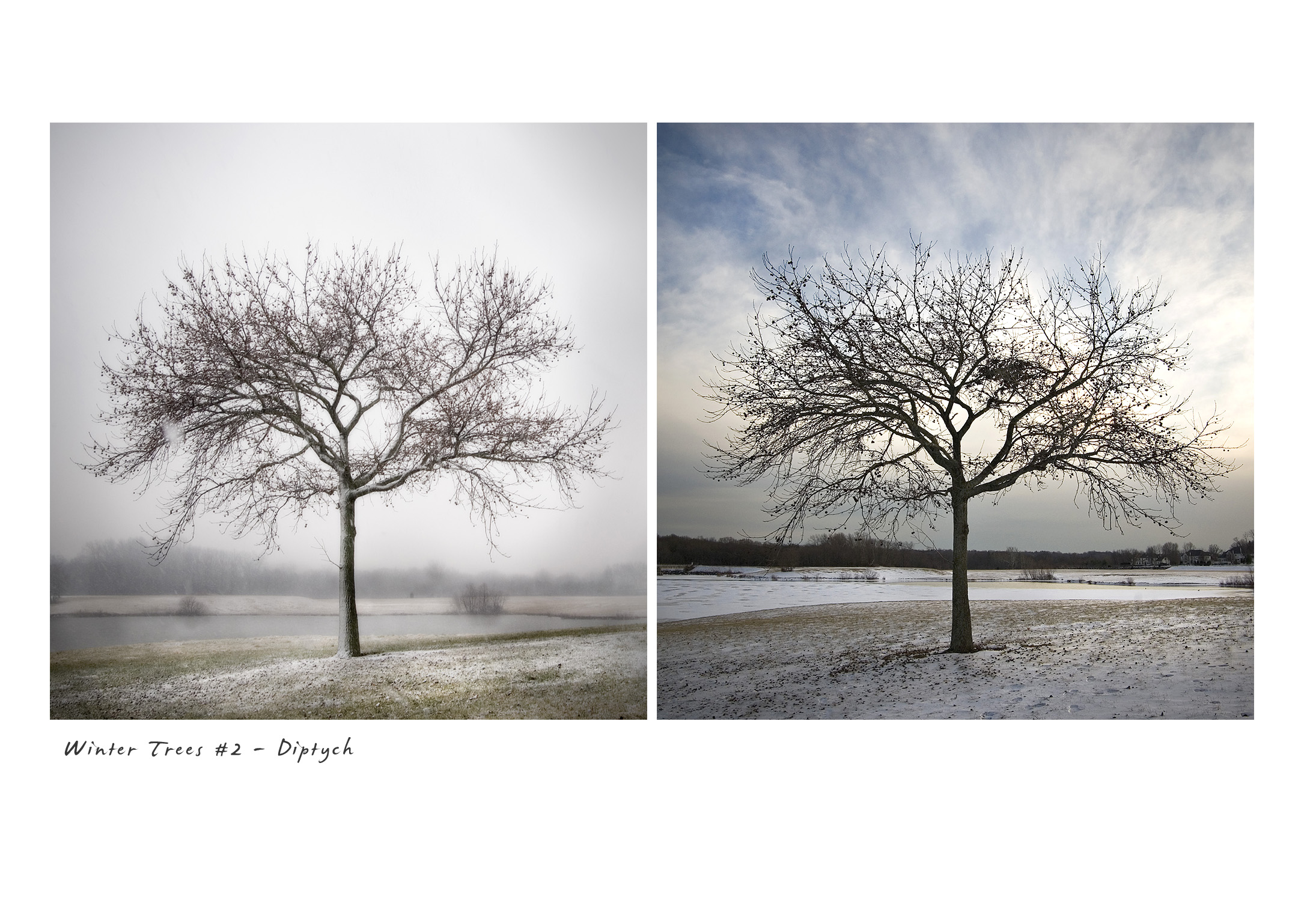 Winter Trees #2 - Diptych