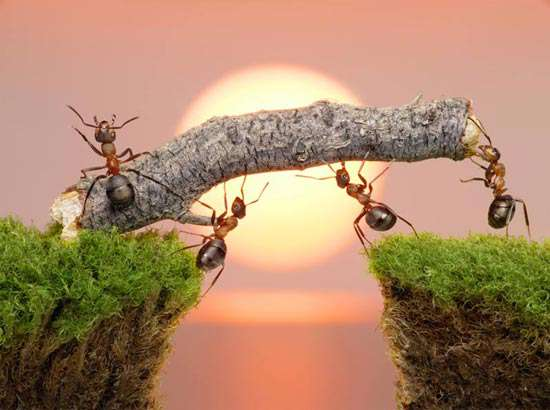 ants working together.jpg