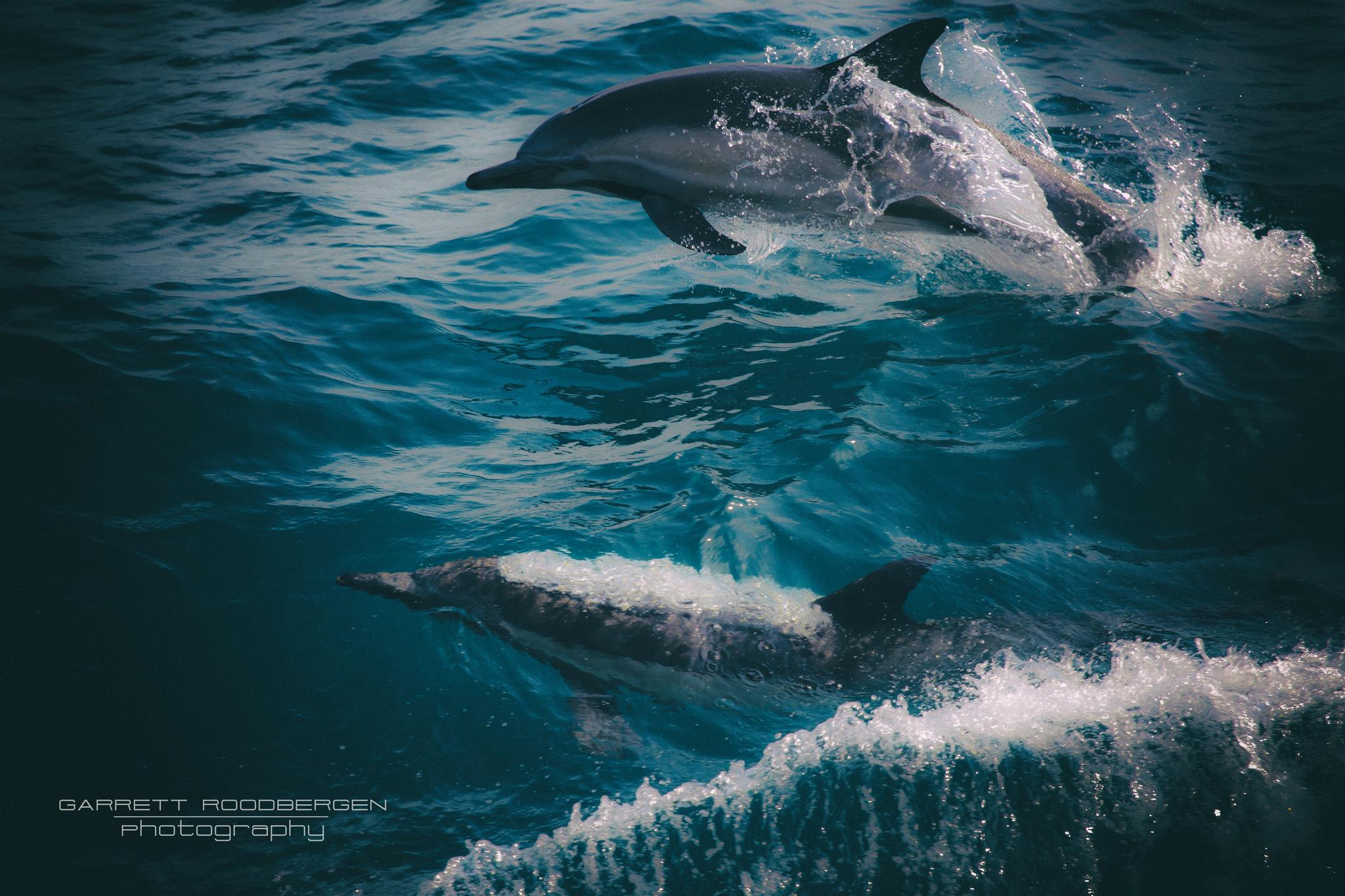 Free as a Dolphin #ocean #wildlife #freedom #summerbreeze