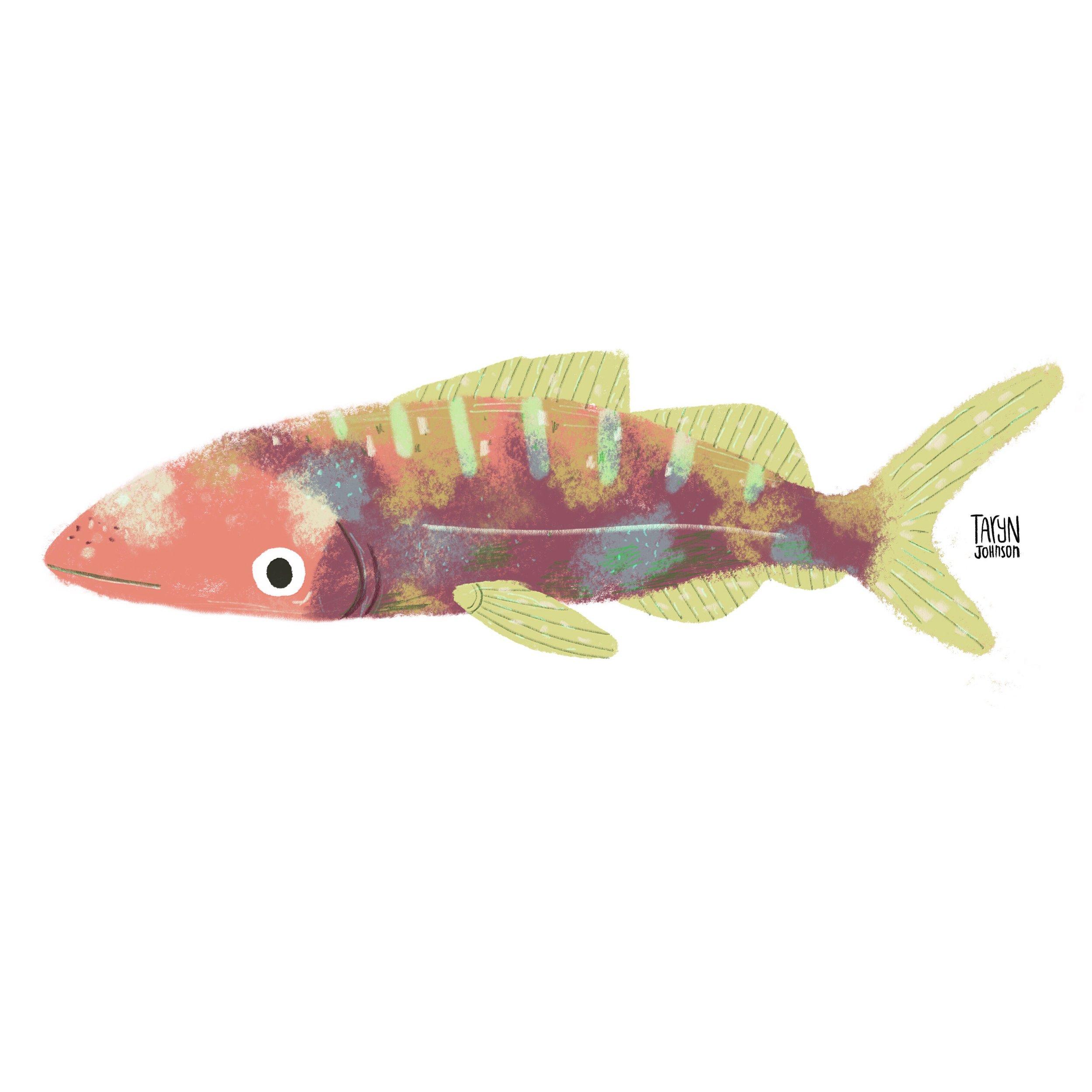 15/100 a soft fish