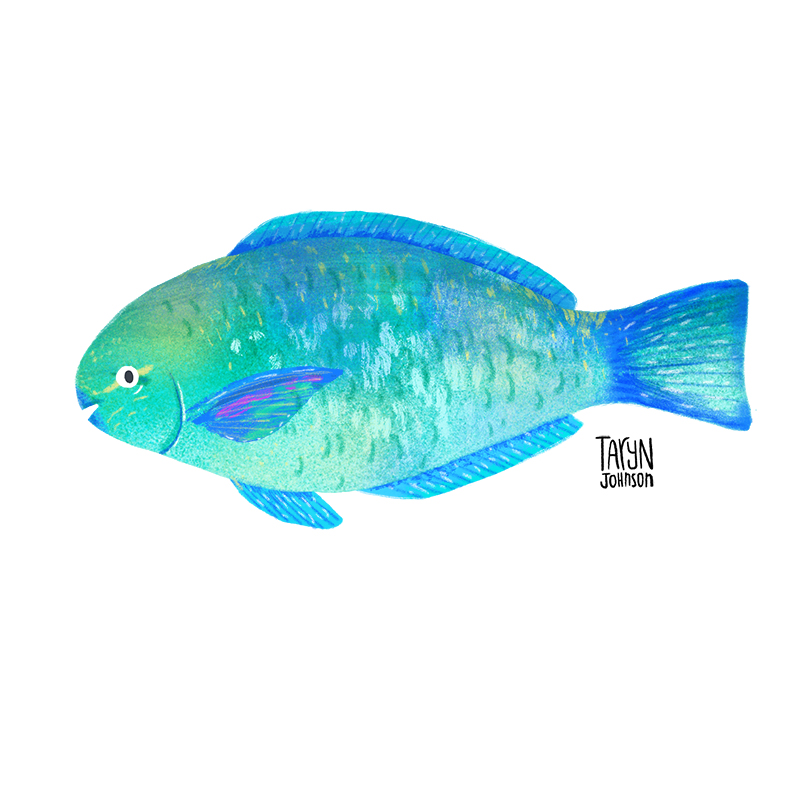 Fish037_tarynjohnson.jpg