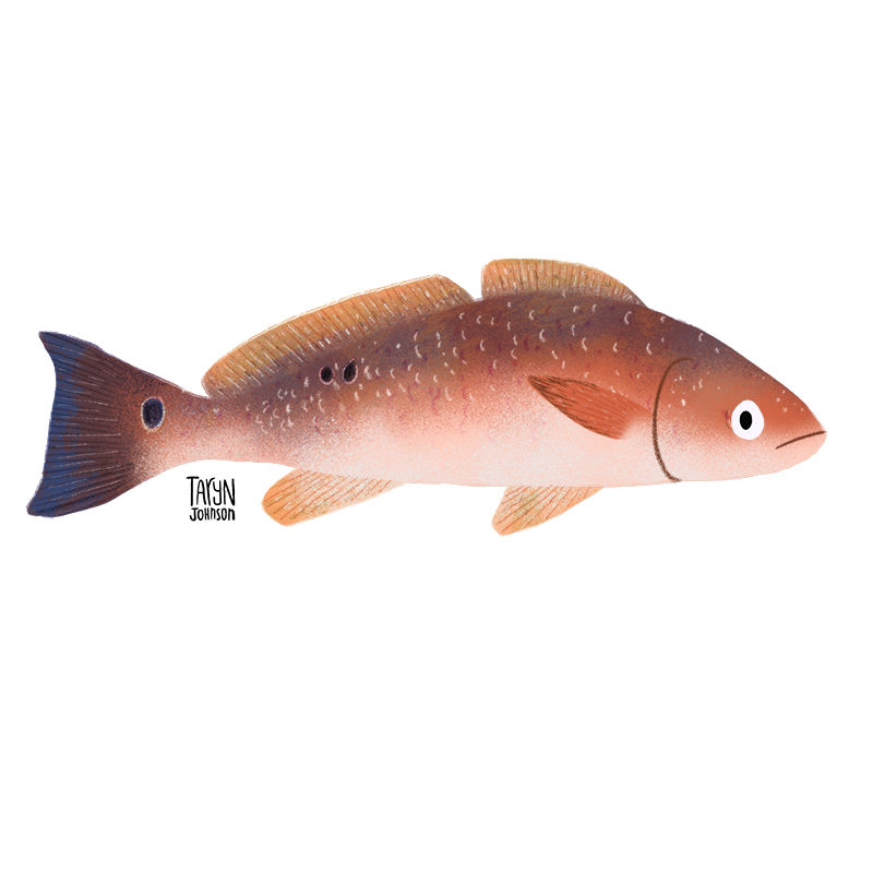 Fish041_tarynjohnson.jpg