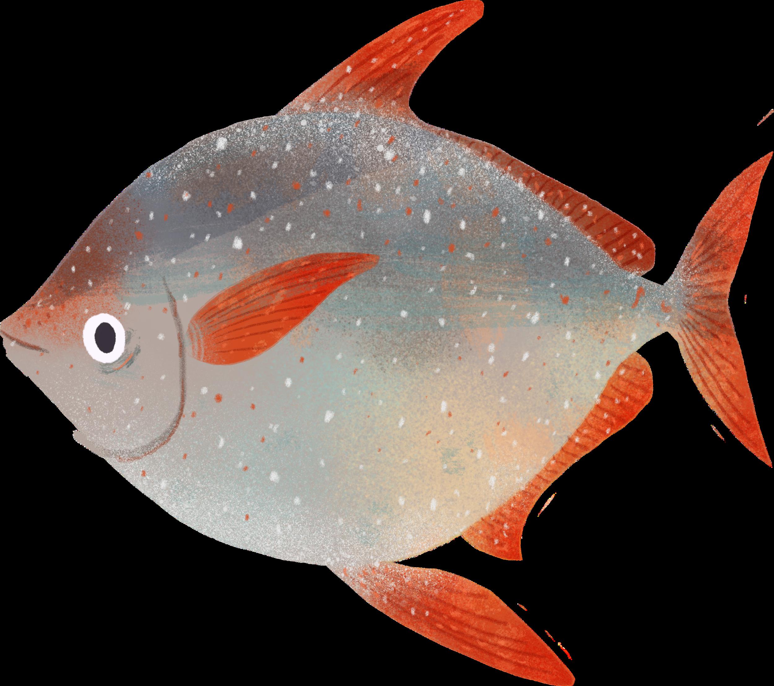 Fish042.png